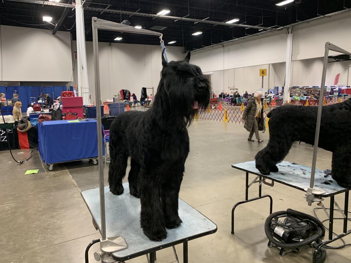 Celebrate Virginia Cluster Dog Show returns to Fredericksburg Expo