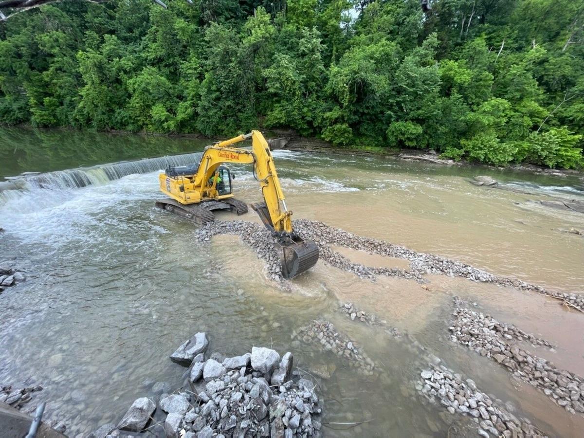 Elkhorn removal 2