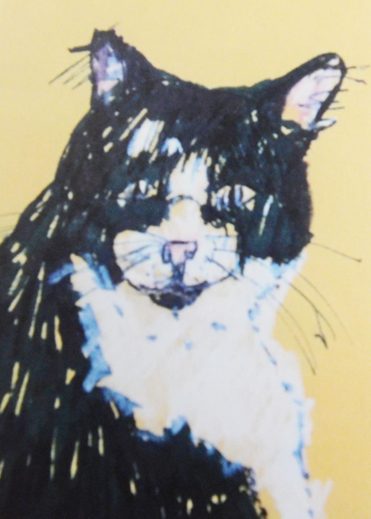 FOCUS: Cat sketch