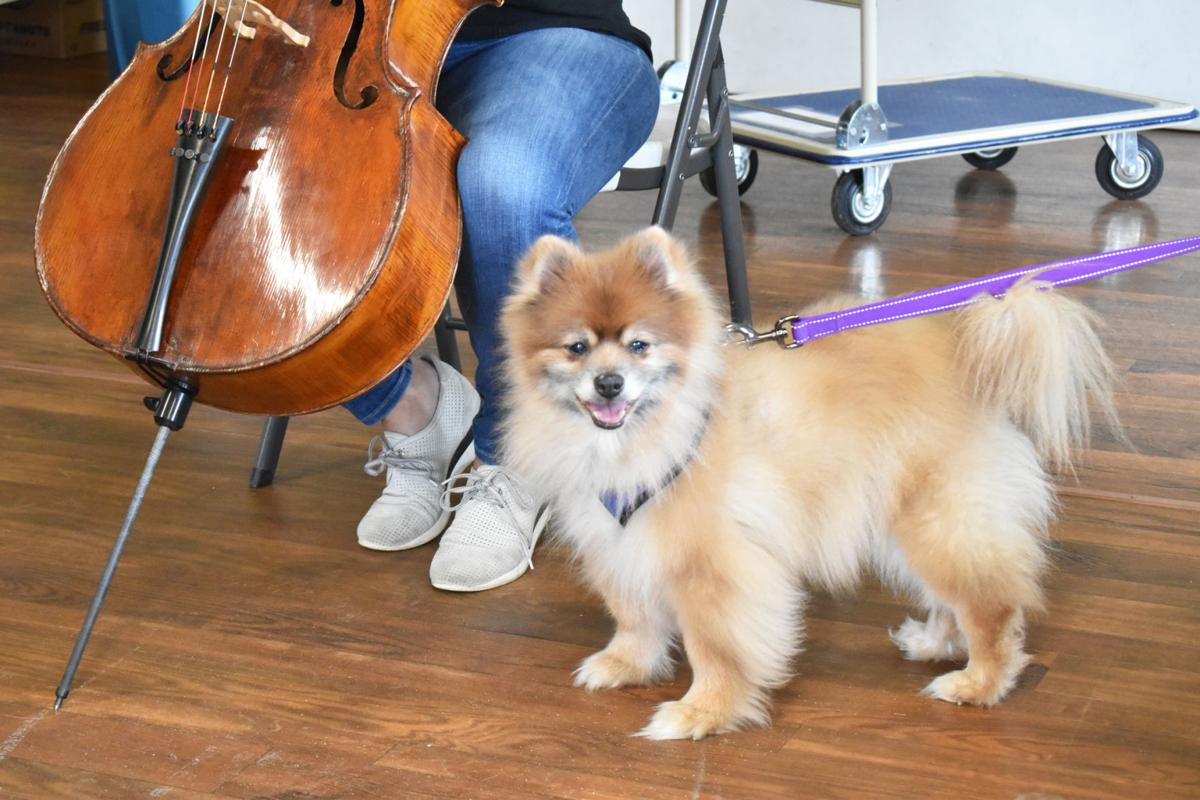 Musician performs classical music for LIFE House dogs