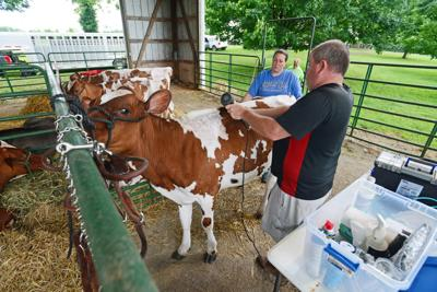 Reins passed to new generation at Franklin County Dairy Show