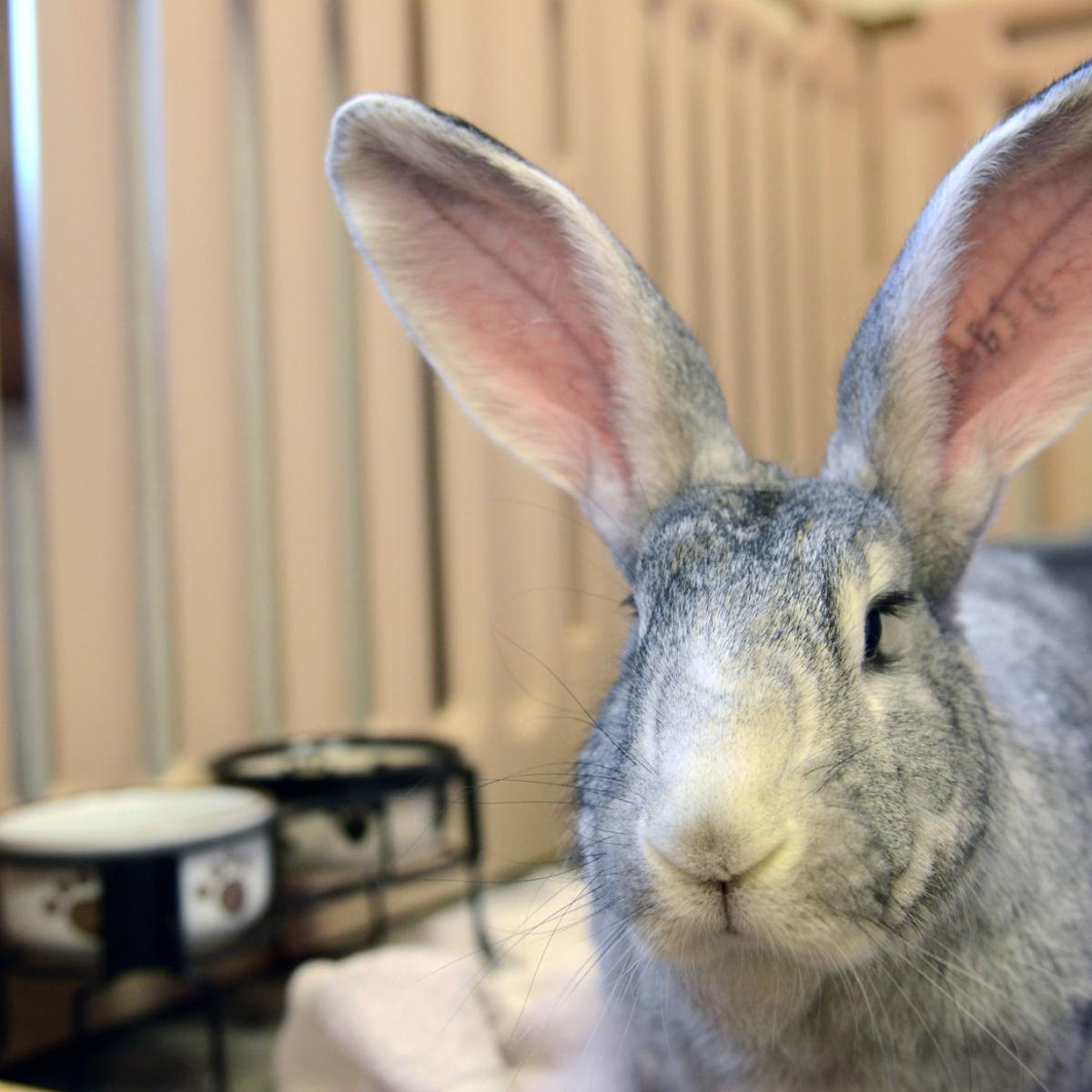 Want To Buy A Bunny Experts Give Their Tips About Ownership