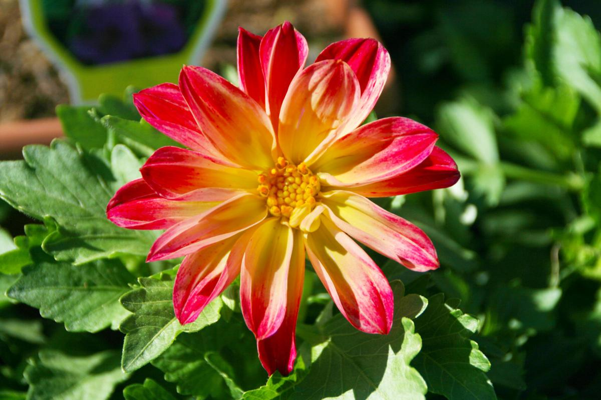 20200416_srl_news_gardening_p1