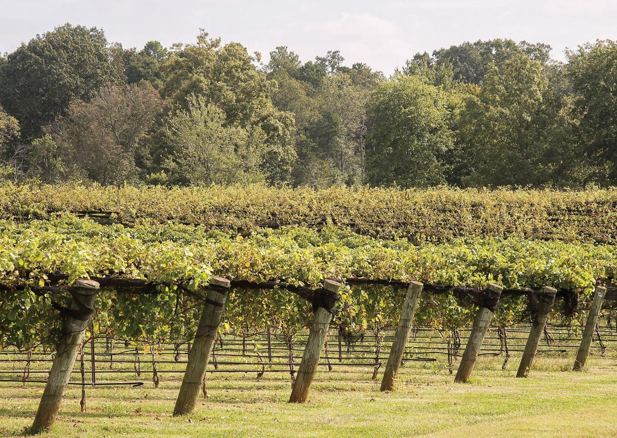 9-26 Vineyard-6