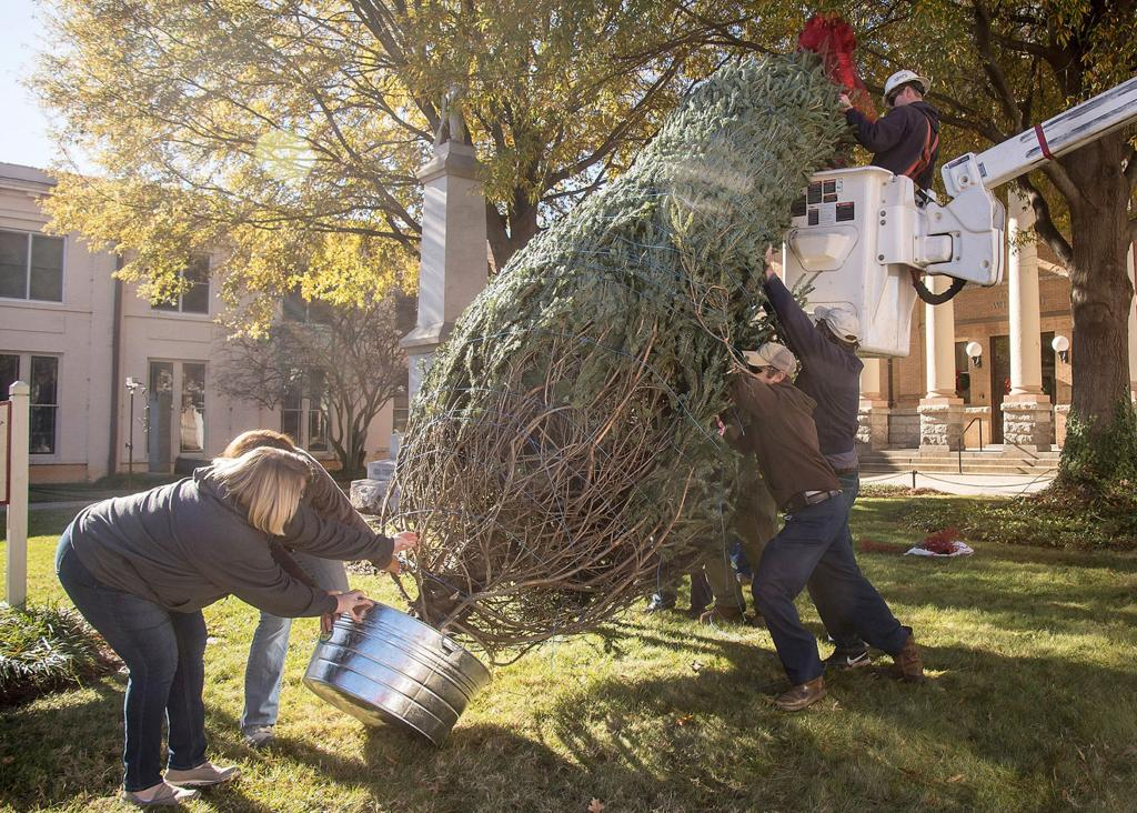 PHOTOS: Christmas tree goes up in