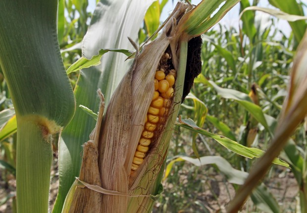 Grain prices may be on the rise