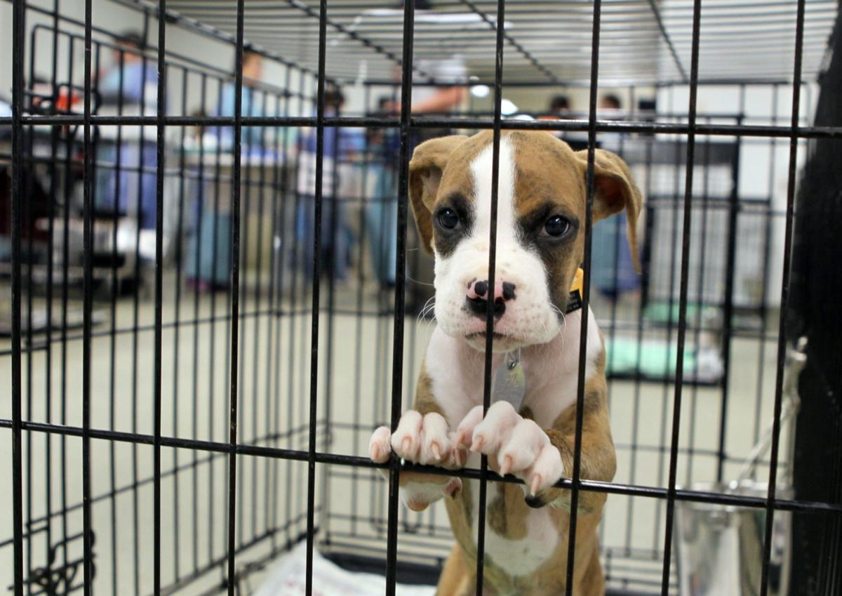 Humane Society of Missouri rescues more dogs