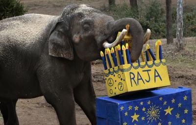 Raja turns 27 on his 'golden birthday'