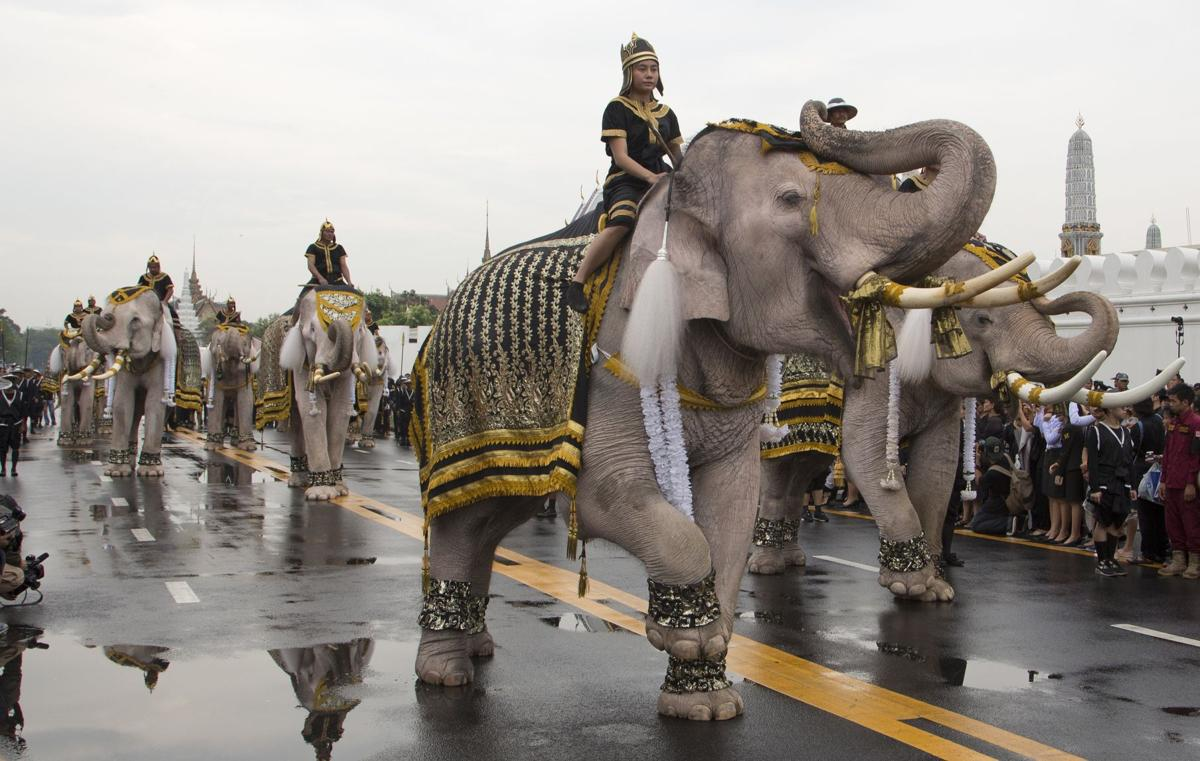 Thailand Elephants King