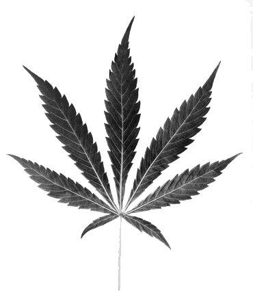 hfmarijuana0616