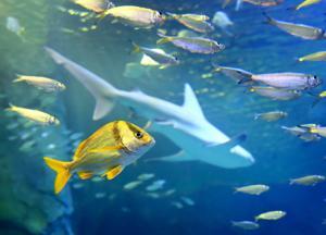 Brauchen Sie eine Pause? Join der Rochen und Haie zum Frühstück bei der St.-Louis-Aquarium