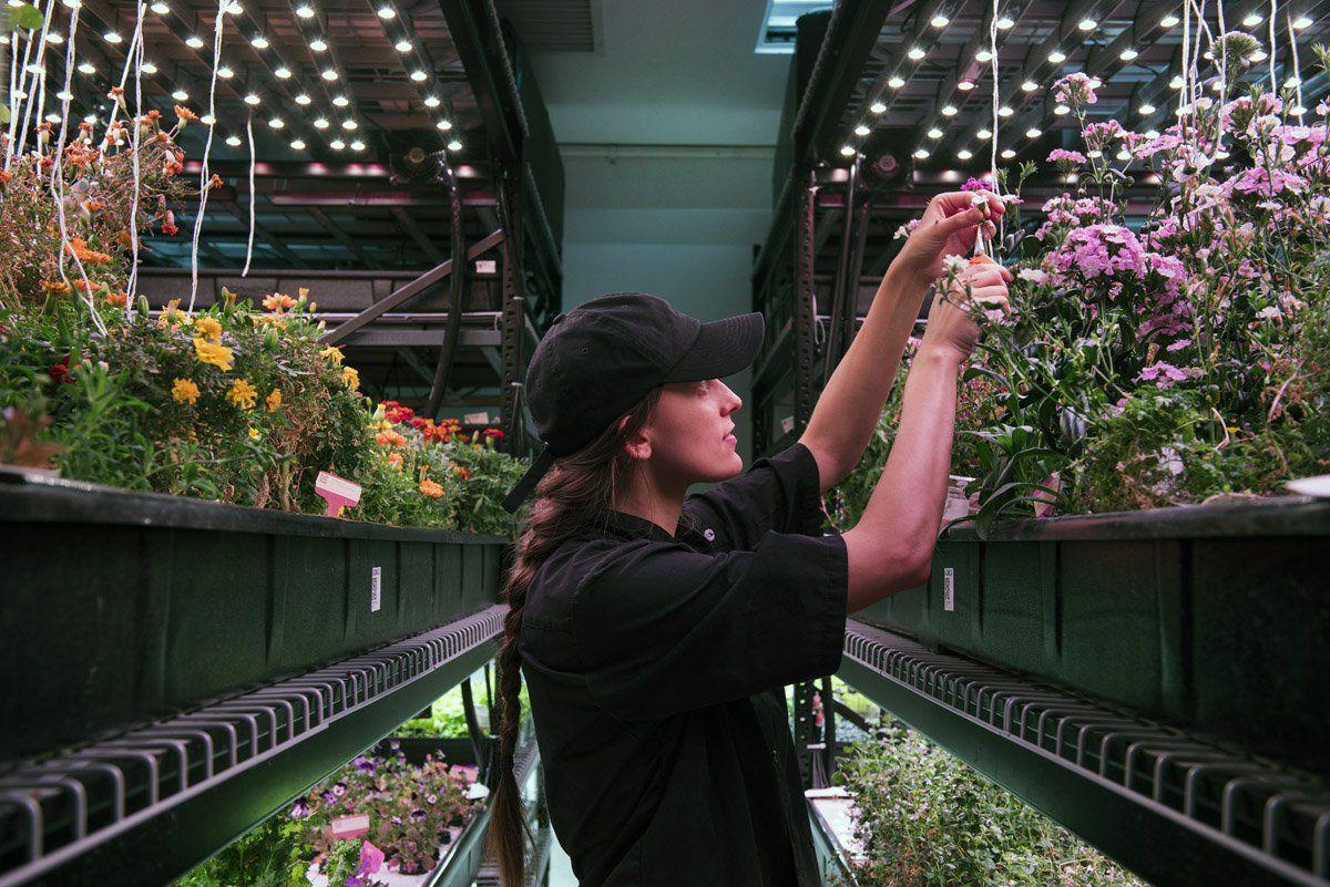 Indoor soilless farm