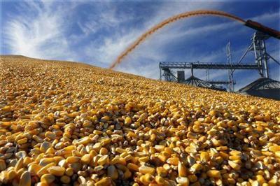 Illinois corn, soybean harvests at the halfway mark