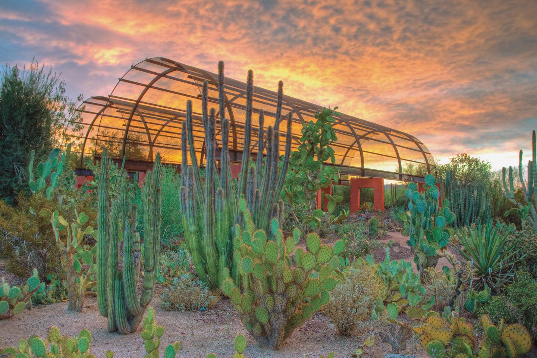 Desert Botanical Garden A winter oasis Escape