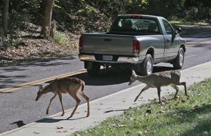 Bogenschießen Hirsch Jagd gehalten werden könnten, im St. Louis County parks unter Vorschlag