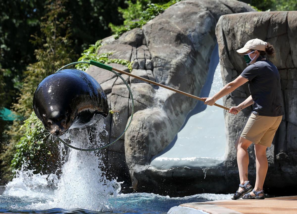 St. Louis Zoo begins reopening after coronavirus shutdown