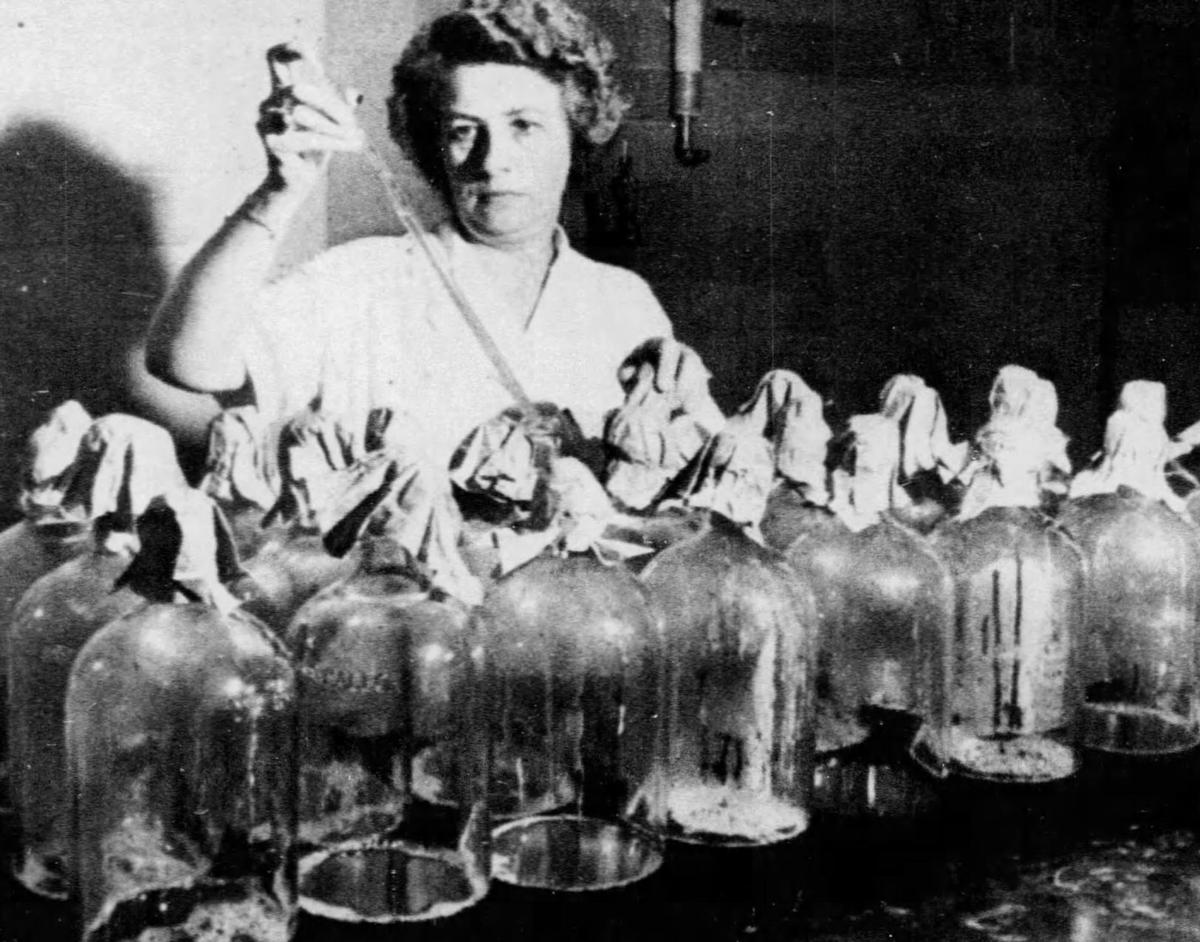 How the 'wonder drug' penicillin went from discovery to mass production,  and the role St. Louis had in it | Post-Dispatch Archives | stltoday.com