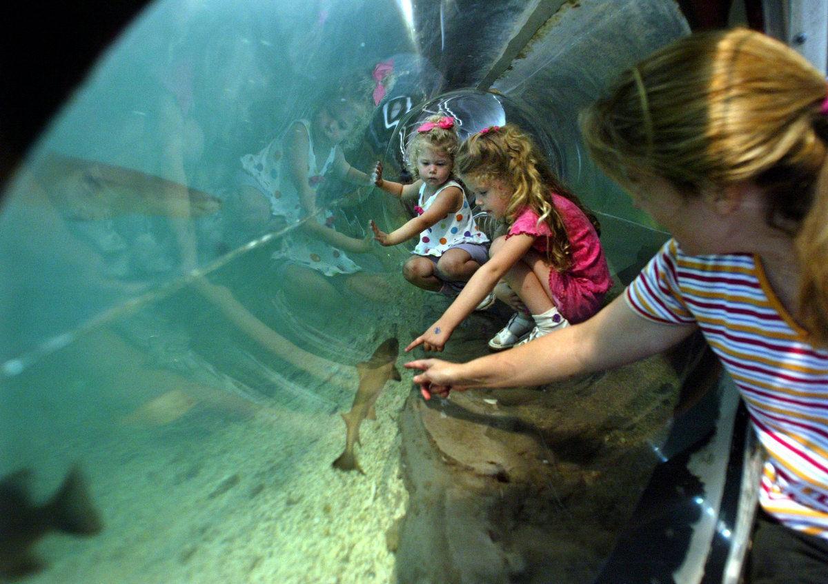 Aquarium In City Museum Passes Inspection To Remain Open