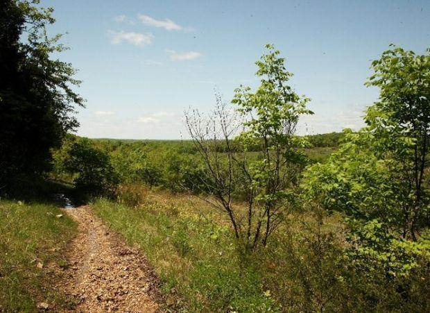 Lee f jackson spring creek forest preserve
