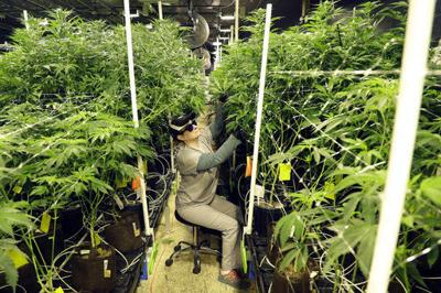 Medical marijuana growing facility in New Jersey