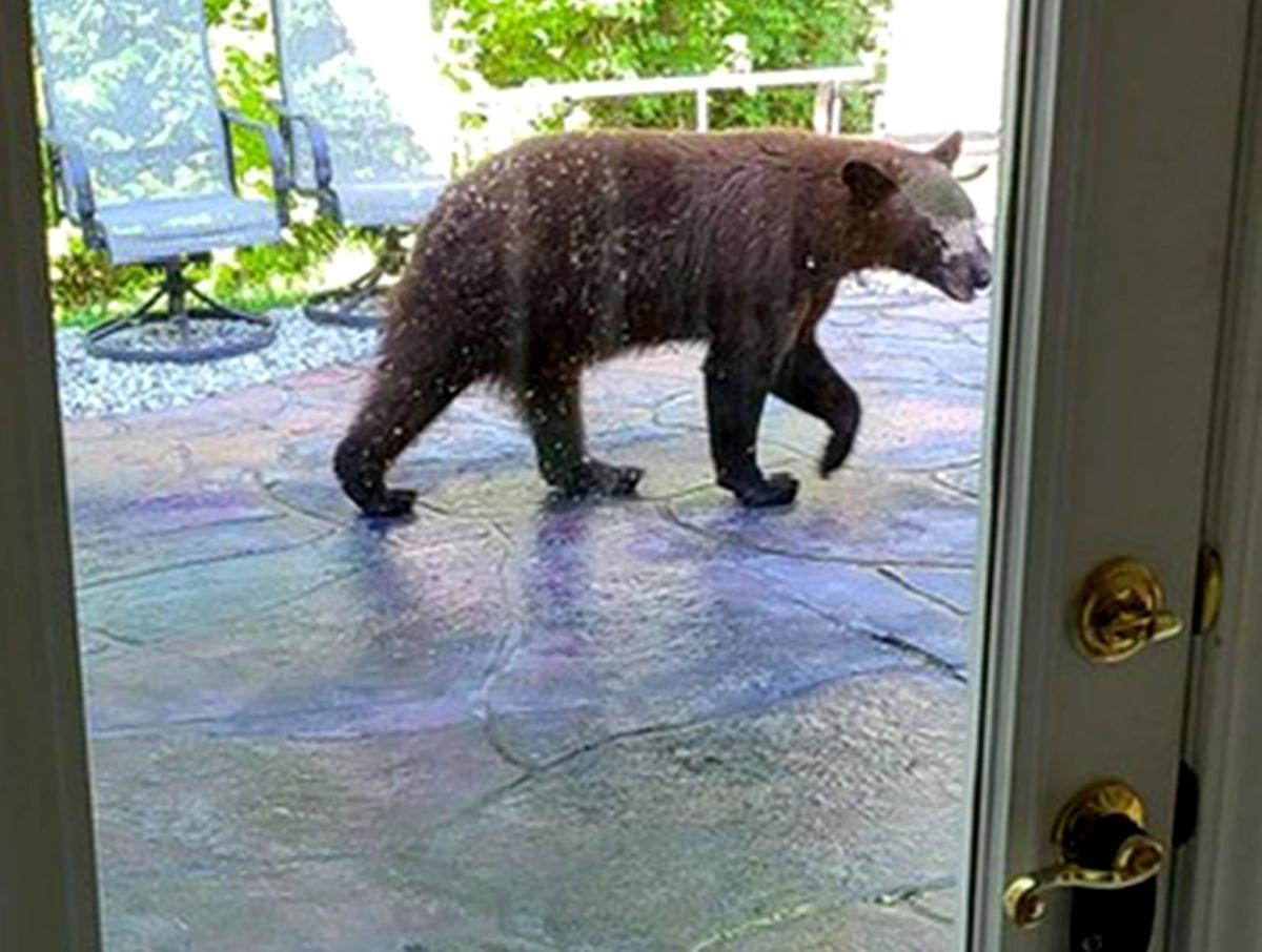 Bear in Waterloo