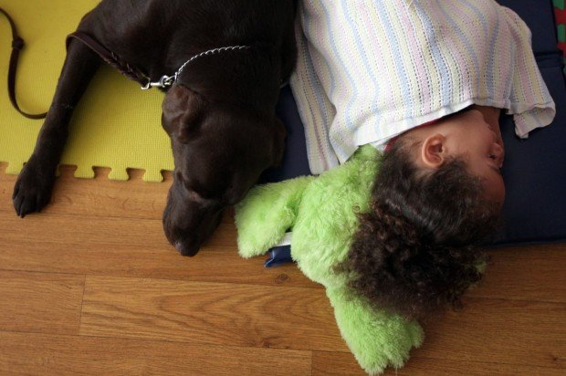 Chocolate Lab Waco Becomes Part of Youth in Need's Head Start Program in Wentzville