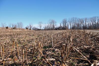 Fall biomass Photo credit to Stephen Radick