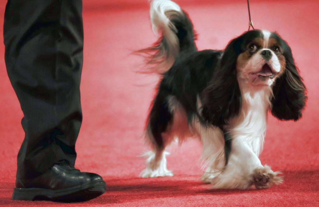 The 19 most popular dog breeds of 2017 | Pets | stltoday com
