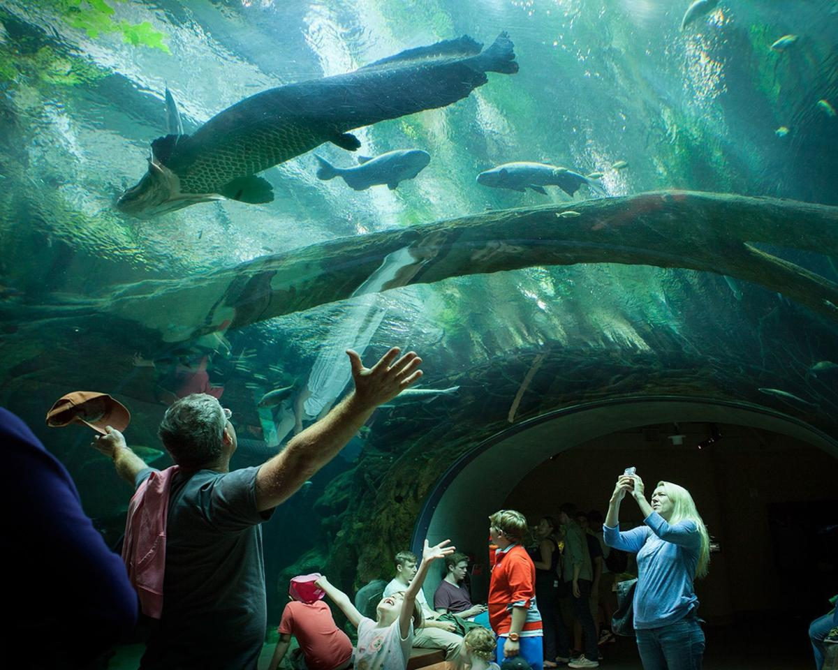 Aquariums of California offer glimpses into marine life