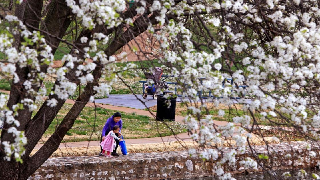 Conservation officials urge Missourians to stop planting Callery, or Bradford, pear trees