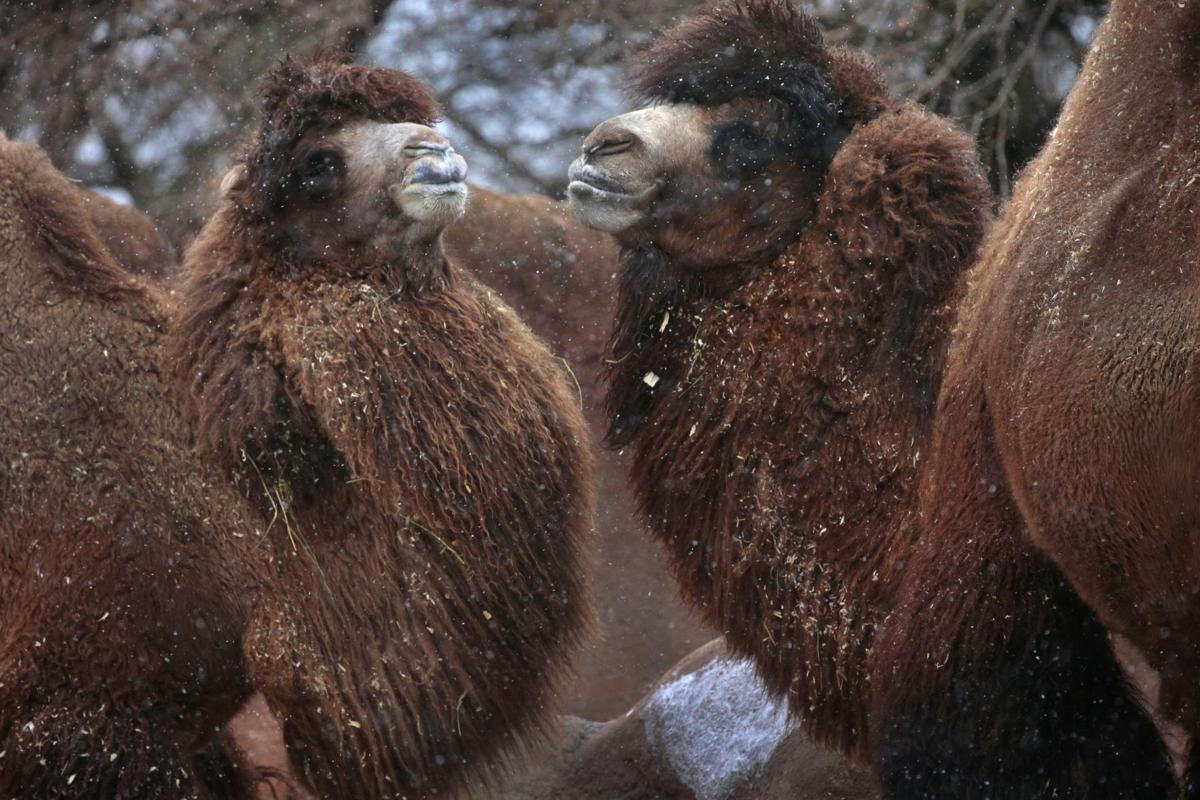 Zoo animals unfazed by winter's gift