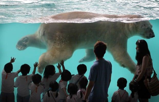 APTOPIX Singapore Polar Bear
