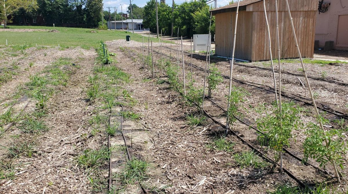 Garden rows at Jubilee Community Church