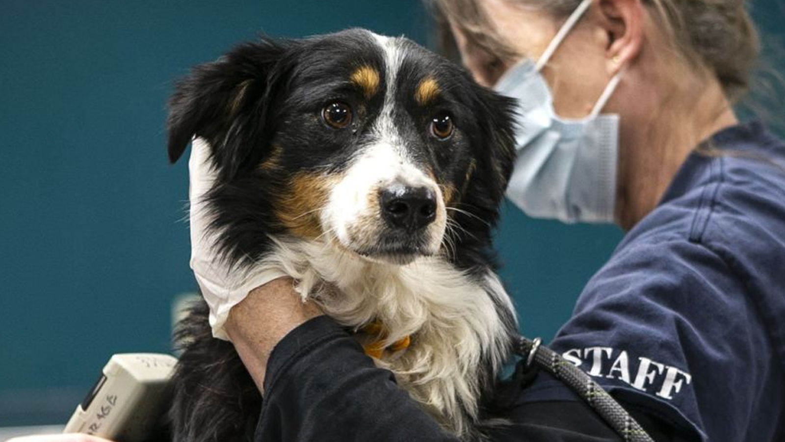 Your daily 6: Cops warned about Nashville bomber last year, GOP congressman-elect dies of COVID-19, 17 dogs rescued from Missouri breeder
