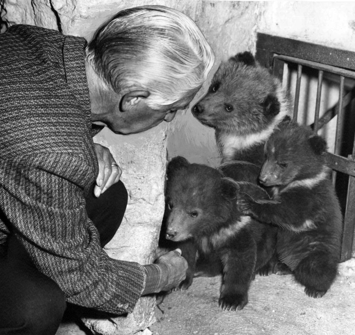 Bears at the St. Louis Zoo in 1965