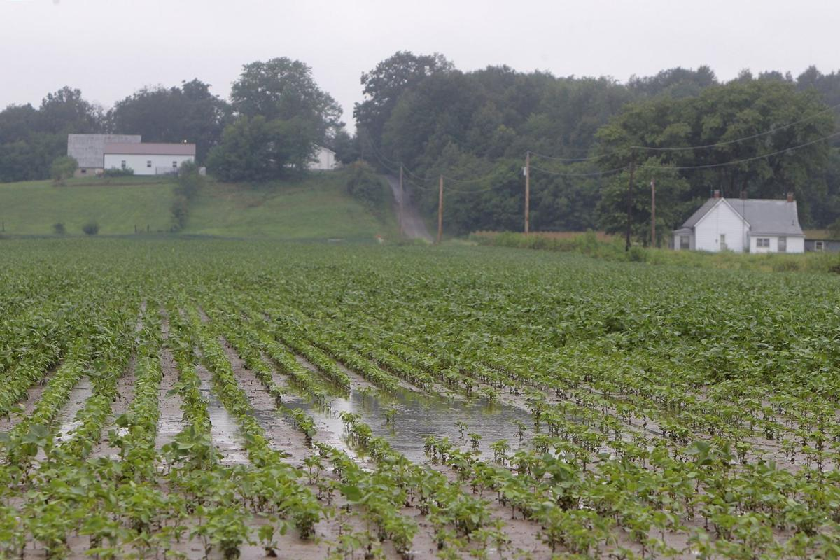 Non-GMO farming