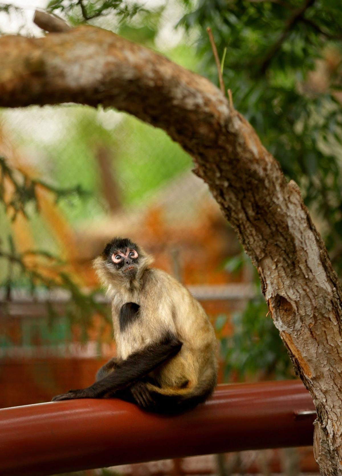 New outdoor primate area to open to public