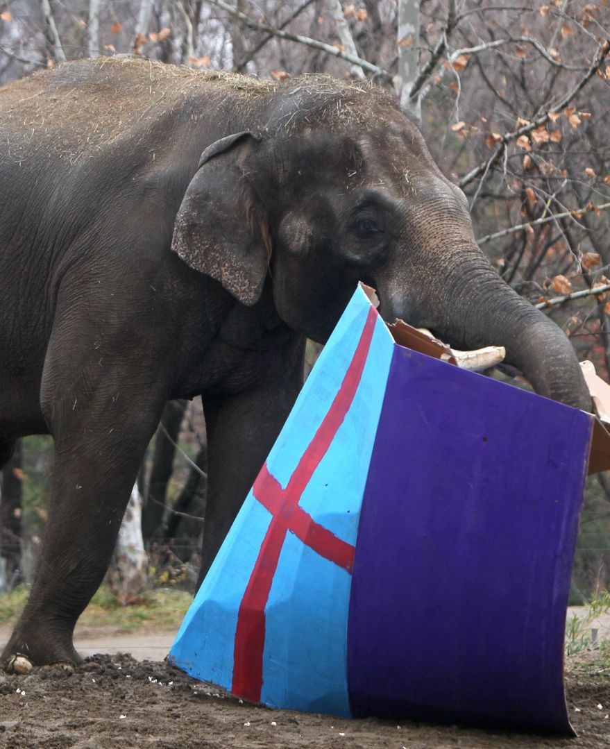 To mark World Elephant Day check out Rajas 22nd birthday party at