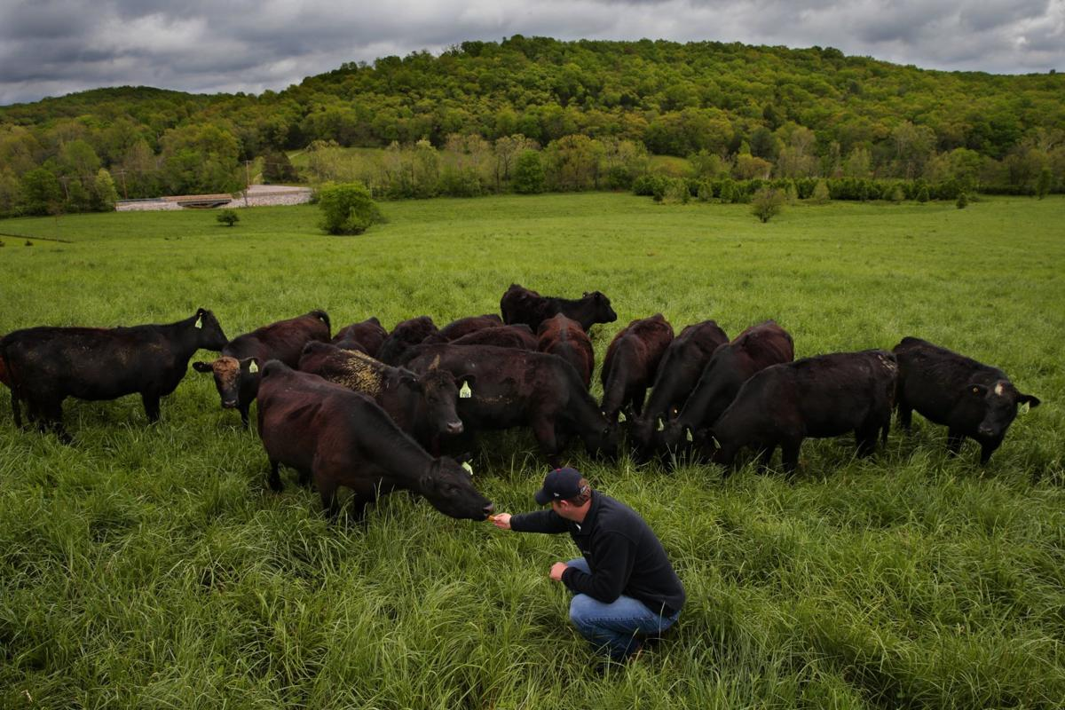 Demand for grass-fed beef soars