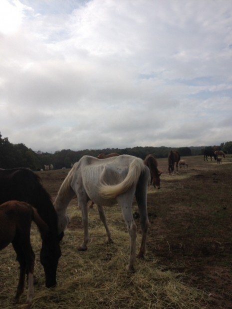 Horse rescued from property in Vienna, Mo