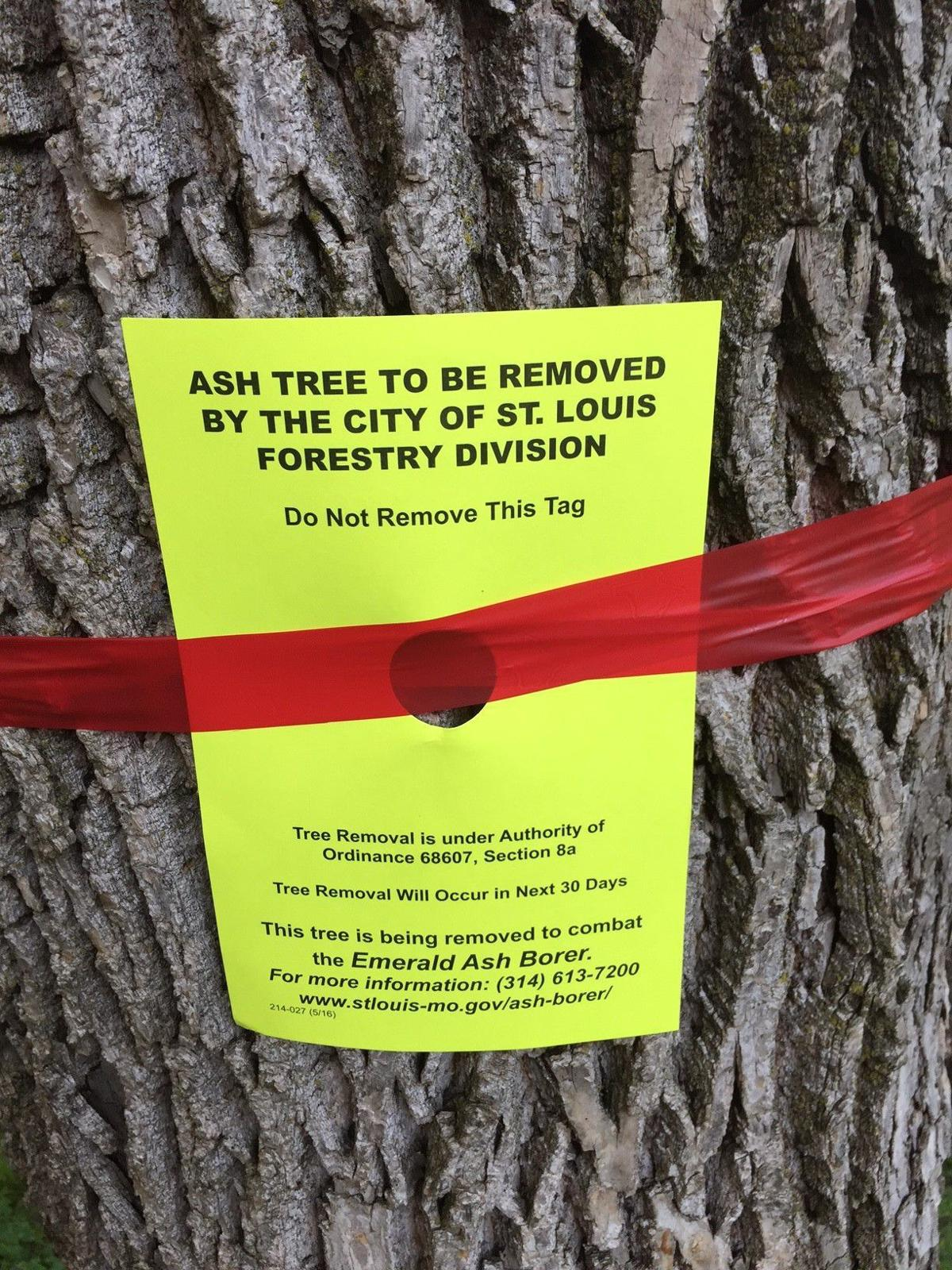 Ash tree removal sign