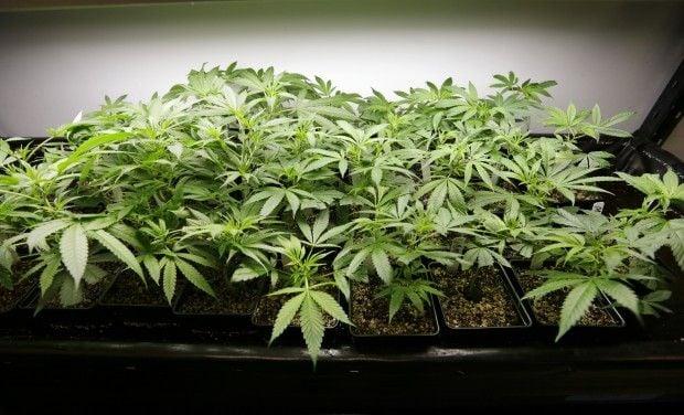 Legalizing Marijuana An Education