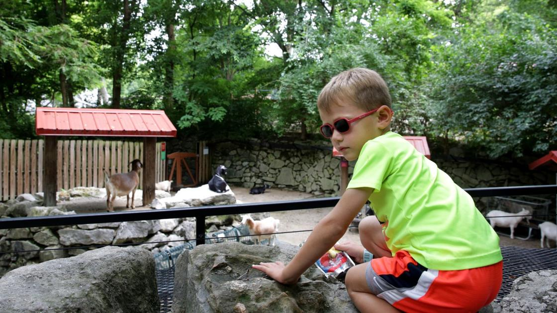 After 50 years, Children's Zoo at St. Louis Zoo will close for good this fall - STLtoday.com