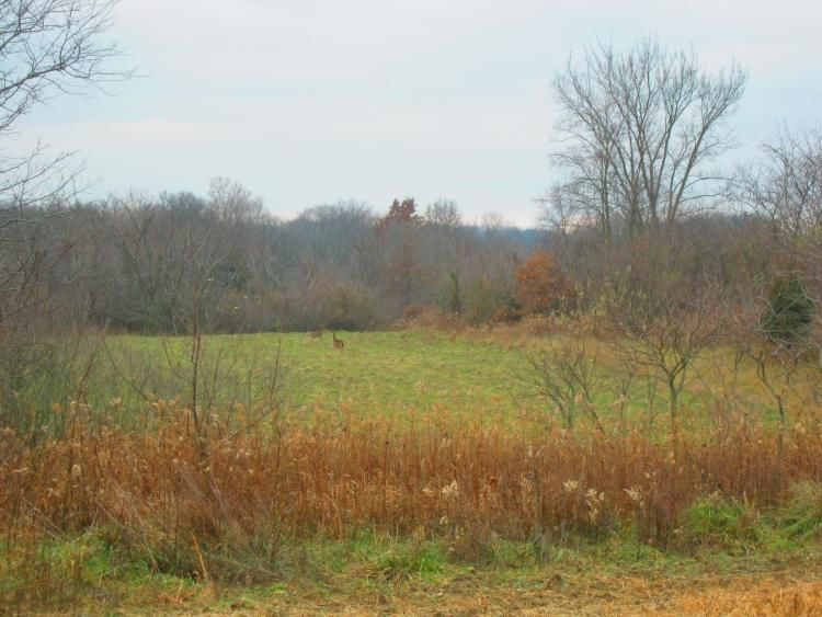 Weldon Spring Conservation area