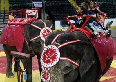 Riding the circus elephants