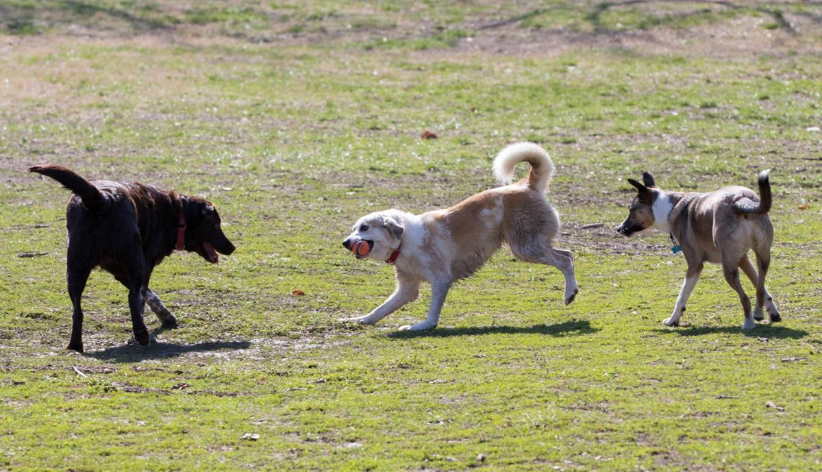Treecourt Unleashed Dog Adventure Park