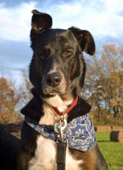 Deaf Dogs Can Make Good Pets With Training Love Pets Stltoday Com