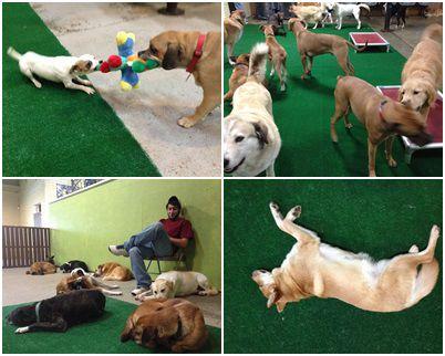 dog daycare collage.jpg
