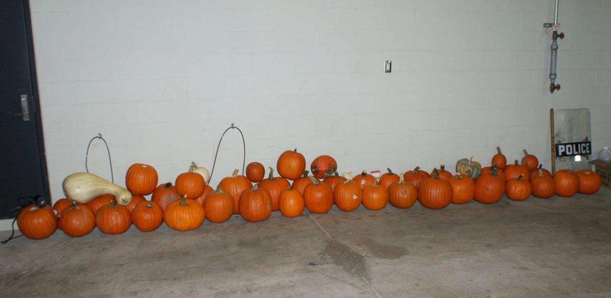 Maryland Heights Pumpkin Lineup