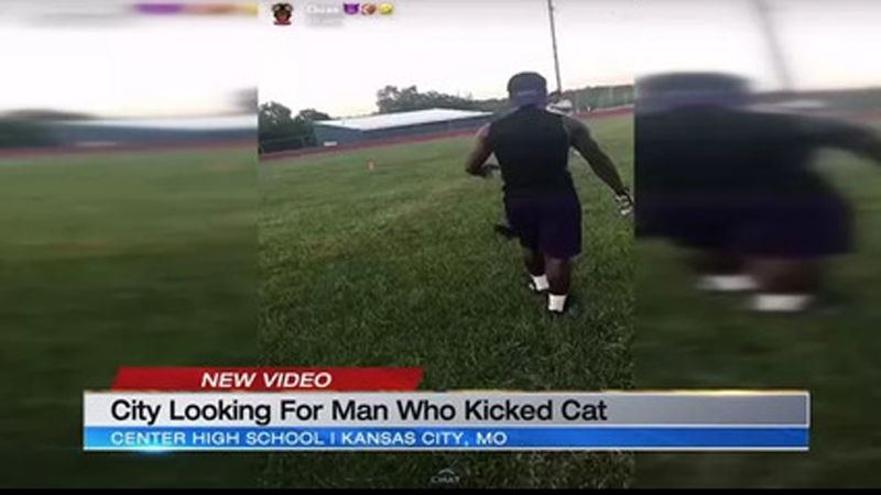 Man shown in video violently kicking cat